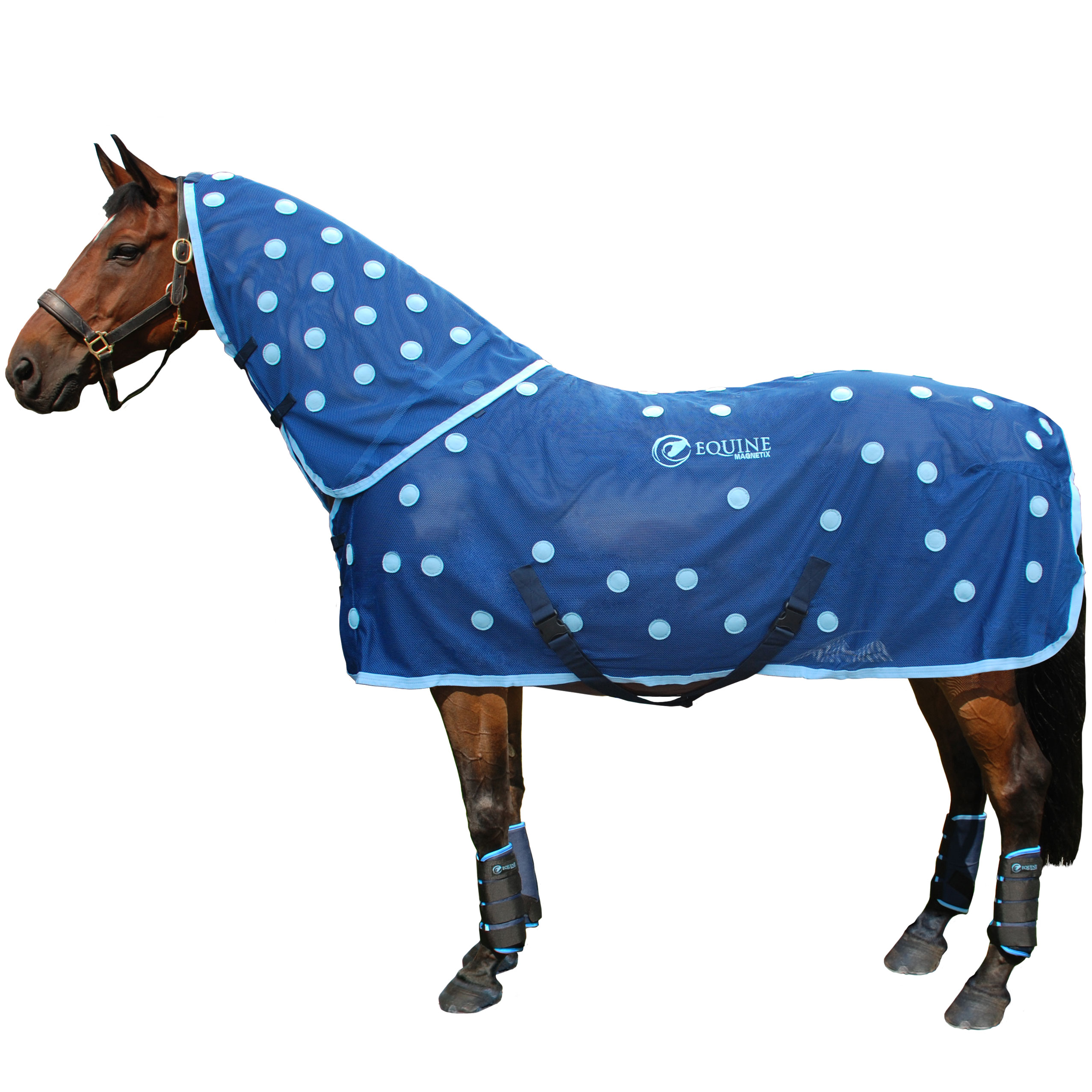 Magnetic Horse Rugs